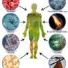 gribki-borodavki-i-gelminty-sposoby-unichtozheniya-parazitov